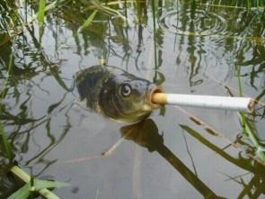 Puff-er Fish