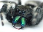 Neon fanged spider