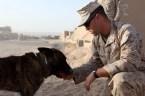 K9 Handler in Afghanistan