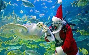 Santa Feeding a Sea Turtle