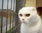 Voldemorts cat