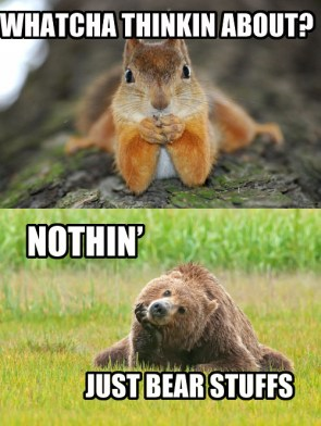 Squirrel and bear thoughts