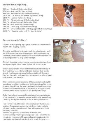 Cats diary