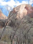Zion National Park 4