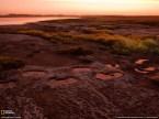 Diprotodon Tracks