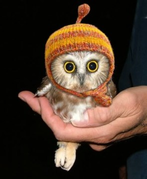 It's time for….BABY OWL IN A HAT