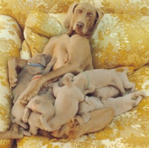 Mom and her litter