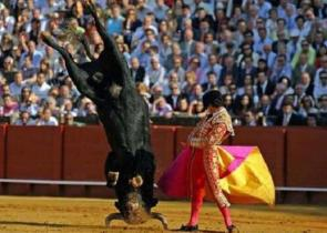 Acrobatic Bullfighting…