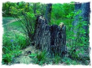 Edited stump