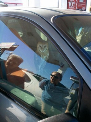 There is a fucking OWL in the car!
