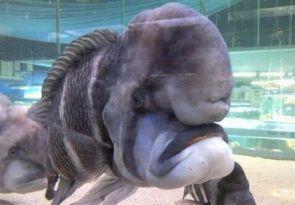 Grumpy old Cichlid