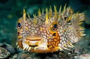 Awesome Fish
