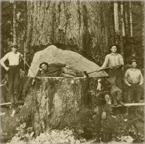 Giant Redwoods will feel the wrath of Immortal!