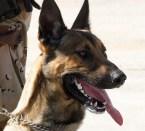 WAR DOG!!!