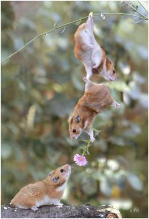 Cute Hamster Gift