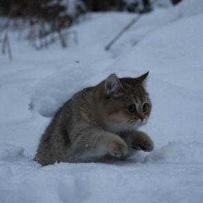 cute stuck cat