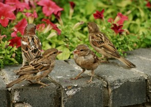 Birds hanging around