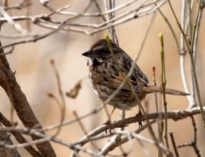 Camo bird