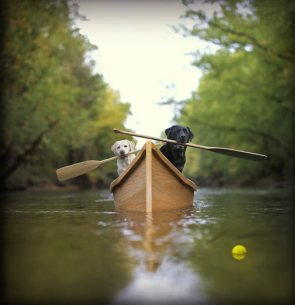 Rowing dogs