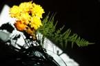 Sun lite flowers