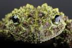 Toad wallpaper