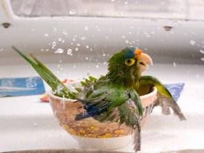 happy parrot