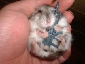 Hamster soldier
