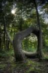 Tree shows its O face
