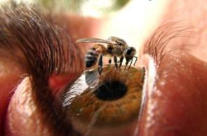 Bee In Eye