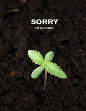 Sorry, I'm Illegal….