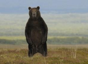 Pee Bear
