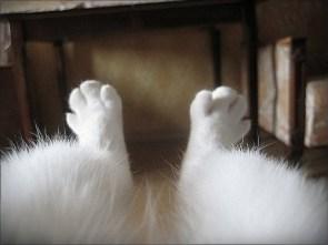 Kitty POV