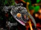Trippin' Lizard