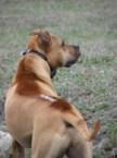 My Pup….