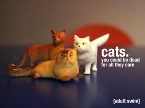 damm cats