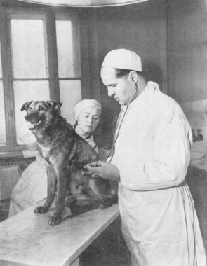 Demikhov Dogs