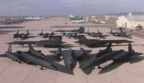 pack of blackbirds