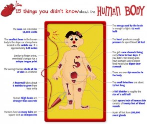 15 things you didn't know about your body