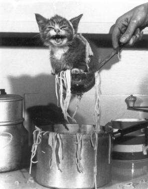 Spaghetti kitten.jpg