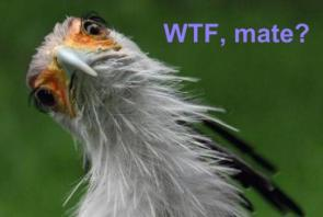 WTFBird is all WTF?