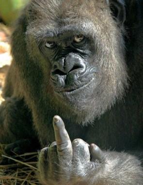 The_Finger.jpg
