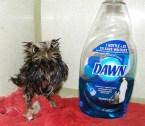Pissed off rescue owl