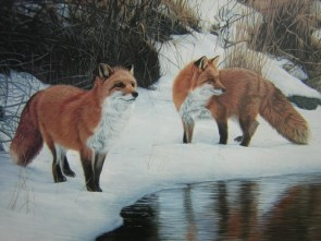 pair of fox