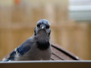 bird on window