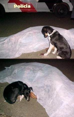 loyal dog.jpg