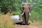 African Road Rage