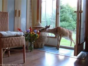 deer intruder