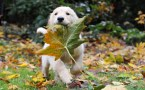 a dog and his leaf