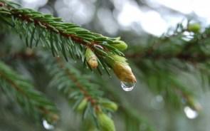 soaked tree