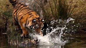 cat meets water